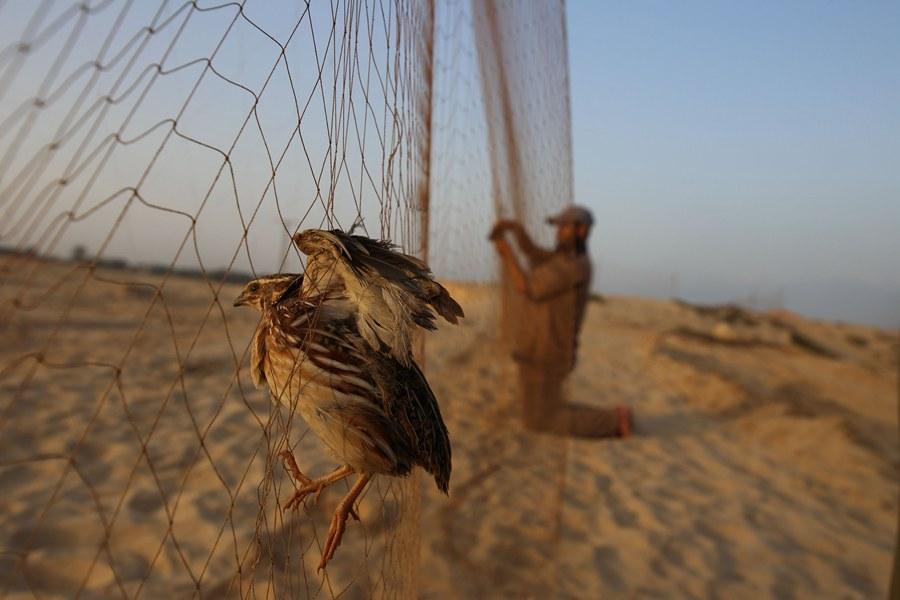 البطالة وغياب الرقابة يدفعان لصيد الطيور الجائر