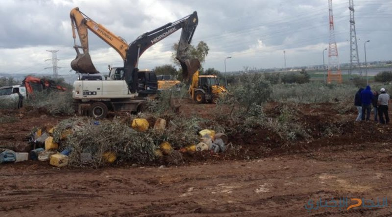 الاحتلال يجرف أراضي ويقتلع أشتال كرمة وزيتون جنوب بيت لحم
