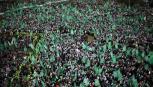 أنصار حركة حماس ( صورة أرشيفية)