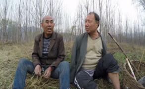رجل أعمى وآخر مبتور الذراعين زرعا غابة في الصين