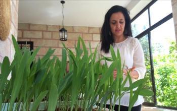 مساع فلسطينية لإنشاء أول مكتبة للبذور النباتية