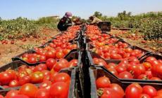 الزراعة تكشف آلية تصدير الخضروات من قطاع غزة