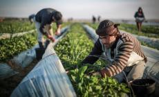 إطلاق 217 مشروعًا زراعيًا تنمويًا في غزة