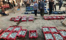 حسبة الصيادين بميناء غزة