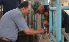 بالصور: الزراعة تنفذ جولات ميدانية على مزارع الأبقار والأغنام في شمال غزة