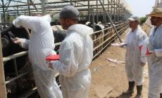 """""""الزراعة"""" تقترب من إنشاء محجر صحي للقطاعين الحيواني والنباتي"""