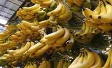 فوائد مذهلة لتناول قشر الموز