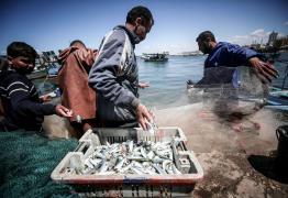 """""""الغزلان"""" سمكة """"التشرين"""" التي تنعش صيادي غزة"""