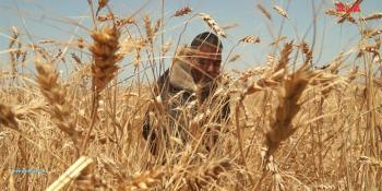 #شاهد| غزة تعلن بدء موسم الحصاد #شوارع_الوطن