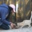غزيات يداوين الحيوانات الضالة